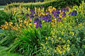 PETTIFERS, OXFORDSHIRE, DESIGNER GINA PRICE: BLUE, YELLOW COMBINATION IN BORDER - AGAPANTHUS QUINK DROPS, HEMEROCALLIS MARGERY FISH, AUGUST