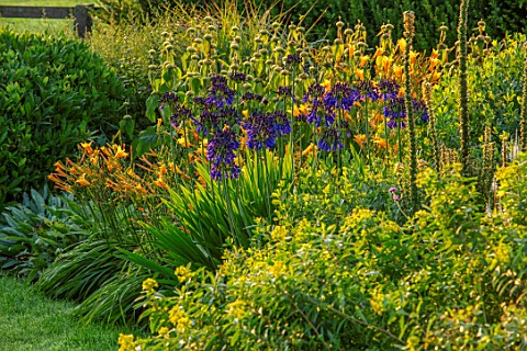 PETTIFERS_OXFORDSHIRE_DESIGNER_GINA_PRICE_BLUE_YELLOW_COMBINATION_IN_BORDER__AGAPANTHUS_QUINK_DROPS_