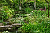 MORTON HALL, WORCESTERSHIRE: THE STROLL GARDEN IN AUGUST, STEPPPING STONES, WATER, POOL, POND, WATER LILIES, BIRCHES