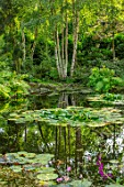 MORTON HALL, WORCESTERSHIRE: THE STROLL GARDEN IN AUGUST, WATER, POOL, POND, WATER LILIES, BIRCHES, REFLECTED, REFLECTIONS