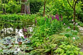 MORTON HALL, WORCESTERSHIRE: THE STROLL GARDEN IN AUGUST, WATER, POOL, POND, WATER LILIES, LOBELIA X SPECIOSA HADSPEN PURPLE