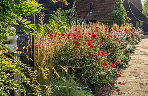 ULTING_WICK_ESSEX_BORDER_BESIDE_STONE_PATH__DAHLIA_GRENADIER_CALAMAGROSTIS_KARL_FOERSTER_PEROVSKIA_B