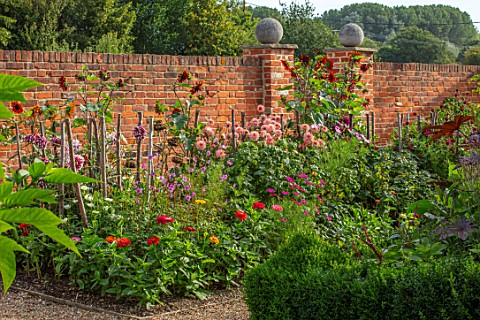 ULTING_WICK_ESSEX_BORDER_BESIDE_WALL__DAHLIA_PREFERENCE_AND_SUNFLOWER__HELIANTHUS_VELVET_QUEEN