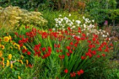 THE PICTON GARDEN AND OLD COURT NURSERIES, WORCESTERSHIRE: CROCOSMIA TAMAR GLOW, ANEMONE X JAPONICA ANDREA ATKINSON, DOELLINGERIA UMBELLATA