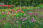 GREEN AND GORGEOUS FLOWERS, OXFORDSHIRE: DAHLIAS AND ALSTROEMERIAS IN THE CUTTING GARDEN, FIELD, SEPTEMBER