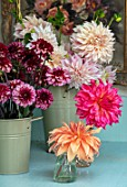 GREEN AND GORGEOUS FLOWERS, OXFORDSHIRE: BUCKETS OF DAHLIAS IN THE FLOWER ROOM. DAHLIA CAFE AU LAIT, DAHLIA SENIOR HOPE, ARRANGEMENTS