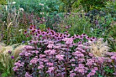 PETRA HOYER MILLAR GARDEN, OXFORDSHIRE: CASTLE END HOUSE - SEDUM MATRONA, ECHINACEA PURPUREA RUBINSTERN, STIPA TENUISSIMA, SANGUISORBA LILAC SQUIRREL, ROMNEYA COULTERI