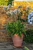 PETRA HOYER MILLAR GARDEN, OXFORDSHIRE: CASTLE END HOUSE - TERRACOTTA CONTAINER ON TERRACE, PATIO PLANTED WITH AGAPANTHUS QUEEN MUM. WHITE, FLOWERS, FLOWERING, BULBS