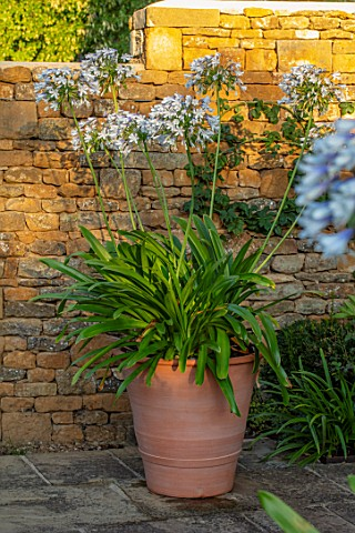PETRA_HOYER_MILLAR_GARDEN_OXFORDSHIRE_CASTLE_END_HOUSE__TERRACOTTA_CONTAINER_ON_TERRACE_PATIO_PLANTE