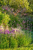BRIDGE NURSERY, WARWICKSHIRE: BORDER WITH MICHAELMAS DAISY, ASTER AMELLUS LOUISE, STIPA TENUISSIMA, SEPTEMBER, GARDENS, BLOOMS