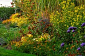 BRIDGE NURSERY, WARWICKSHIRE: BORDER, HELIANTHEMUM LEMON QUEEN, HELENIUM MOERHEIM BEAUTY, SORBUS, RUDBECKIA GOLDSTURM, BORDERS, YELLOW, ORANGE, FLOWERING