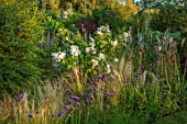 BRIDGE NURSERY, WARWICKSHIRE: BORDER, STIPA TENUISSIMA, ROSE - ROSA SALLY HOLMES, MISCANTHUS KLEINE FONTAINE, VERBENA BONARIENSIS, GRASSES, BORDERS, FALL, FLOWERS