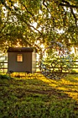MITTON MANOR, STAFFORDSHIRE: PATH, GATE, TREE, SHEDS, SUMMERHOUSE, OFFICE, LAWN, SUNRISE, COUNTRY, GARDEN, ENGLISH, LAWN, BUBBLE SWING SEAT BY MYBURGH DESIGNS