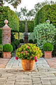 MITTON MANOR, STAFFORDSHIRE: TERRACE, TERRACOTTA CONTAINER WITH HYDRANGEA, HORNBEAM AVENUE, CLIPPED, TOPIARY, SEPTEMBER, FORMAL, ENGLISH, COUNTRY GARDEN