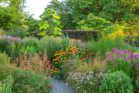 THE_PICTON_GARDEN_AND_OLD_COURT_NURSERIES_WORCESTERSHIRE_BORDERS_OF_ASTERS_AGASTACHE_AURANTIACA_NAVA