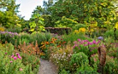 THE PICTON GARDEN AND OLD COURT NURSERIES, WORCESTERSHIRE: BORDERS OF ASTERS, AGASTACHE AURANTIACA NAVAJO SUNSET, RUDBECKIA HIRTA SEEDLING, SEPTEMBER, FALL
