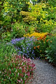 THE PICTON GARDEN AND OLD COURT NURSERIES, WORCESTERSHIRE: BORDERS, PERSICARIA AFFINIS DONALD LOWNDES, ASTER X FRIKARTII MONCH, HELENIUM SAHINS EARLY FLOWERER, RUDBECKIA DEAMII