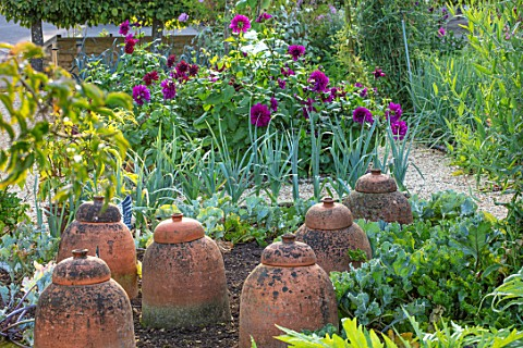 ROCKCLIFFE_GARDEN_GLOUCESTERSHIRE_THE_KITCHEN_GARDEN_POTAGER_IN_SEPTEMBER_DAHLIAS_LEEKS_RHUBARB_FORC