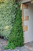ROCKCLIFFE GARDEN, GLOUCESTERSHIRE: ROSEMARY TRAINED UP WALL IN PYRAMID IN SWIMMING POOL GARDEN