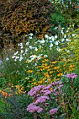 THE PICTON GARDEN AND OLD COURT NURSERIES, WORCESTERSHIRE: BORDER, SEPTEMBER, SEDUM AUTUMN JOY, RUDBECKIA FULGIDA VAR. DEAMII, ANEMONE JAPONICA ANDREA ATKINSON