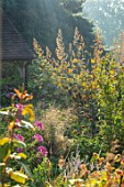 GRAVETYE MANOR, SUSSEX: MORNING LIGHT, BORDERS, SEPTEMBER, CLEOME SPINOSA VIOLET QUEEN, MACLEAYA CORDATA, MIST, FOG