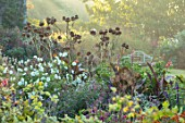GRAVETYE MANOR, SUSSEX - BORDER, WHITE COSMOS, CARDOONS, CANNAS, SALVIA AMISTAD, SEPTEMBER, MIST, SUNRISE