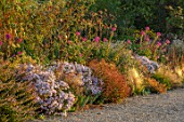 GRAVETYE MANOR, SUSSEX - BORDER, SEPTEMBER - ASTERS, CLEOME SPINOSA VIOLET QUEEN, STIPA TENUISSIMA