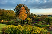 PETTIFERS GARDEN, OXFORDSHIRE: THE PARTERRE IN AUTUMN WITH HELIANTHUS LEMON QUEEN, CLIPPED BOX HEDGING, HEDGES, DAHLIAS, SEPTEMBER
