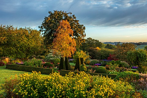 PETTIFERS_GARDEN_OXFORDSHIRE_THE_PARTERRE_IN_AUTUMN_WITH_HELIANTHUS_LEMON_QUEEN_CLIPPED_BOX_HEDGING_
