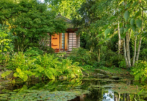 MORTON_HALL_WORCESTERSHIRE_STROLL_GARDEN_OCTOBER_JAPANESE_TEA_HOUSE_BUILDING_WATER_POND_POOL_BETULA_