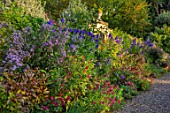 MORTON HALL, WORCESTERSHIRE: BORDER, OCTOBER, ACONITUM CARMICHAELII, SALVIA WENDYS WISH, SALVIA NEON, ROSA FALSTAFF, SYMPHYOTRICHUM LAEVIS CALLIOPE, ASTERS