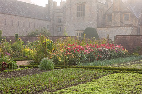 FORDE_ABBEY_SOMERSET_THE_KITCHEN_GARDEN_IN_AUTUMN_OCTOBER_FALL_MIST_FOG_DAHLIAS_BORDERS