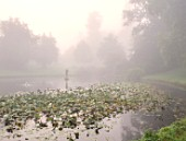 FORDE ABBEY, SOMERSET: LAKE AND STATUE IN MIST, FOG, OCTOBER, FALL, MORNING LIGHT, WATERLILIES