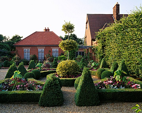 BUXUS_SEMPERVIRENS_FORM_TOPIARY_KNOT_GARDEN__BALL_OF_ILEX_X_ALTACLERENSIS_GOLDEN_KINGTHE_OLD_VICARAG