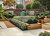 DESIGNER ANTHONY PAUL: SMALL, TOWN, FORMAL, GARDEN, CLIPPED, TOPIARY, BOX, BALLS, SCULPTURE, GRAVEL, STEPS, WATER FEATURE, ELEAGNUS, LAVENDER, LONDON