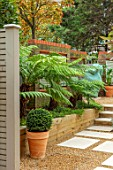 DESIGNER ANTHONY PAUL: SMALL, TOWN, FORMAL, LONDON, WALLS, TRELLIS, RAISED, BEDS, BOX BALLS IN CONTAINERS, TREE FERNS, DICKSONIA ANTARCTICA, GREEN