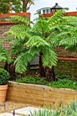 DESIGNER ANTHONY PAUL: SMALL, TOWN, FORMAL, LONDON, WALLS, RAISED, BEDS, TREE FERNS, DICKSONIA ANTARCTICA, GREEN, PATHS, PAVING, GRAVEL