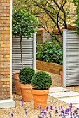 DESIGNER ANTHONY PAUL: SMALL, TOWN, FORMAL, LONDON, WALLS, TRELLIS, RAISED, BEDS, BOX BALLS IN CONTAINERS, TREE FERNS, PATHS, PAVING, GRAVEL