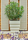 DESIGNER ANTHONY PAUL: SMALL, TOWN, FORMAL, LONDON, WALLS, TRELLIS, GRAVEL, CONTAINER, OLEANDER