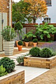 DESIGNER ANTHONY PAUL: SMALL, TOWN, FORMAL, LONDON, WALLS, TRELLIS, RAISED, BEDS, BOX BALLS IN CONTAINERS, TREE FERNS, DICKSONIA ANTARCTICA, GREEN, PATHS, PAVING, GRAVEL