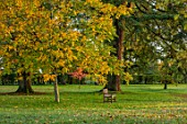 MORTON HALL GARDENS, WORCESTERSHIRE: WHITE HORSE CHESTNUT IN THE PARK, SUNRISE, ENGLISH, COUNTRY, GARDENS, LEAVES, FOLIAGE, FALL, AUTUMN, WOODEN, SEAT, BENCHES