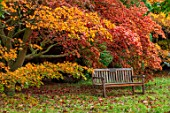 THORP PERROW ARBORETUM, YORKSHIRE: WOODEN BENCH, SEAT, RED, ORANGE LEAVES, FOLIAGE OF MAPLES IN AUTUMN, FALL, TREES, ACERS, ACER PALMATUM