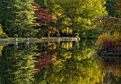 THORP PERROW ARBORETUM, YORKSHIRE: THE LAKE IN AUTUMN. TREES, LAKES, WATER, EVENING LIGHT, REFLECTIONS, REFLECTED