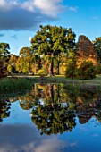 THORP PERROW ARBORETUM, YORKSHIRE: CATHERINE PARRS OAK REFLECTED IN LAKE, WATER, POOL, AUTUMN, FALL, TREES