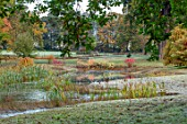 THORP PERROW ARBORETUM, YORKSHIRE: POOL, POND, LAKE, BULLRUSHES, CORNUS, FALL, AUTUMN, FROST, FROSTY