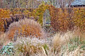 THE OLD RECTORY, QUINTON, NORTHAMPTONSHIRE: DESIGNER ANOUSHKA FEILER: GRASSES, AUTUMN, FALL, STIPA CALAMAGROSTIS, PENNISETUM HAMELN, LIBERTIA CHILENSIS, BEECH, METAL SEAT, HEDGES