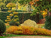 THE OLD  RECTORY, QUINTON, NORTHAMPTONSHIRE: FALL, AUTUMN, ROCKS, CLIPPED TOPIARY CARPINUS BETULUS, COMMON HORNBEAM, YEW, HAKONECHLOA MACRA