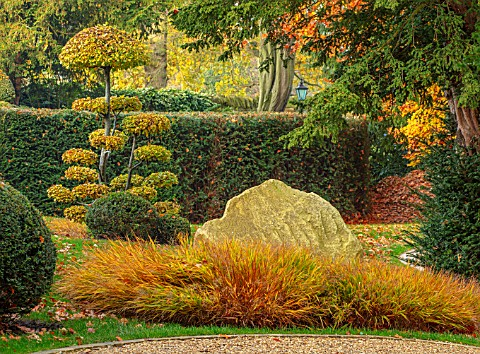THE_OLD__RECTORY_QUINTON_NORTHAMPTONSHIRE_FALL_AUTUMN_ROCKS_CLIPPED_TOPIARY_CARPINUS_BETULUS_COMMON_