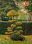 THE OLD  RECTORY, QUINTON, NORTHAMPTONSHIRE: FALL, AUTUMN, CLIPPED TOPIARY CARPINUS BETULUS, COMMON HORNBEAM, YEW
