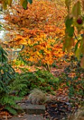 MORTON HALL GARDENS, WORCESTERSHIRE: STROLL GARDEN,AUTUMN, WINTER, ACER, MAPLES, LEAVES, FOLIAGE